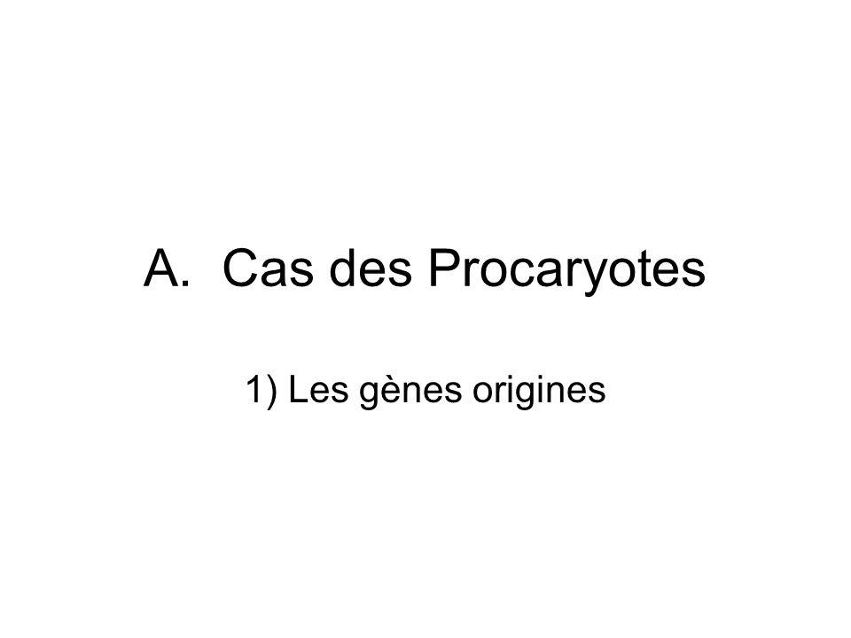 Les gènes origines