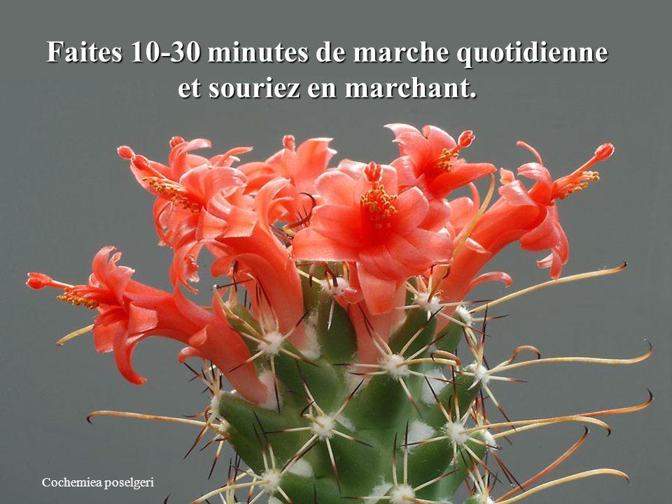 Petites astuces pour une vie meilleure en 2011 Cliquez et admirez les fleurs de cactées.