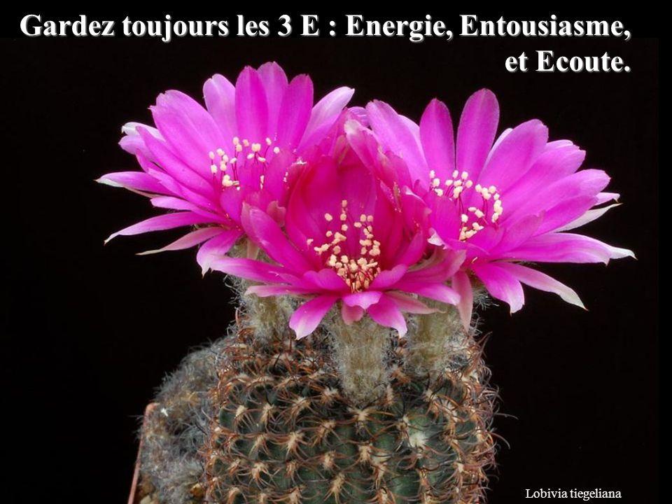 Lobivia tiegeliana Gardez toujours les 3 E : Energie, Entousiasme, et Ecoute.