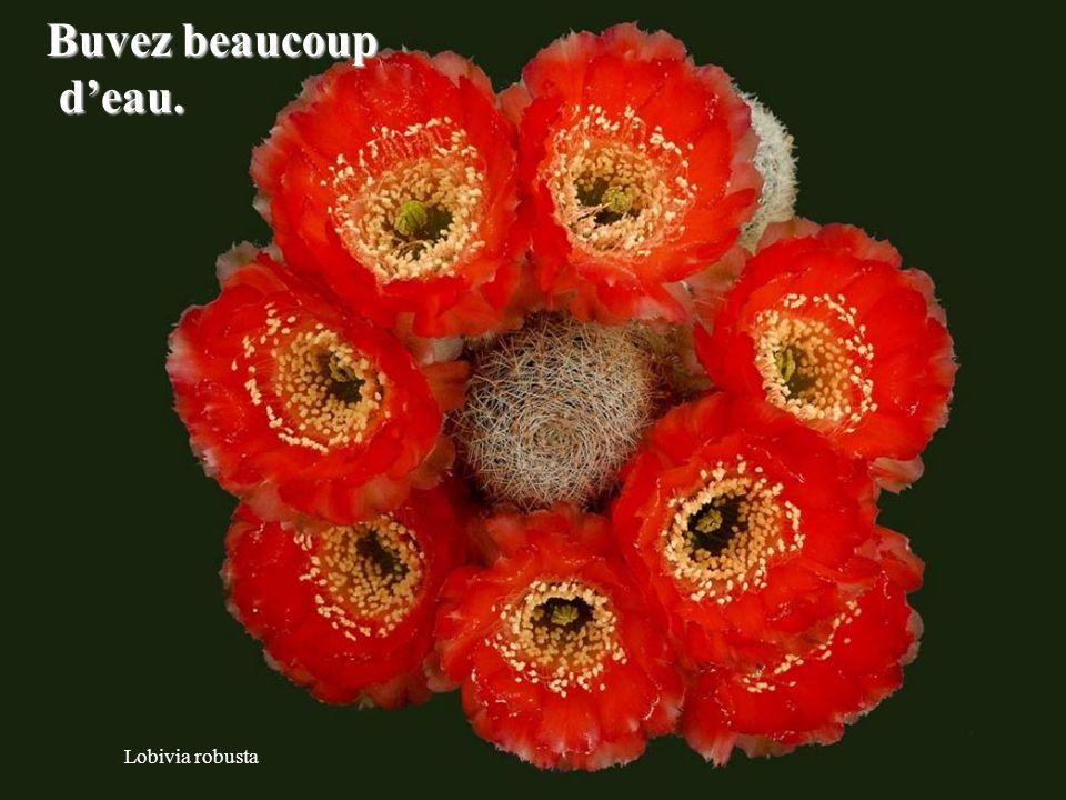 Copiapoa tenuissima Aussi difficle que soit la situation, elle ne pourra que s'améliorer.