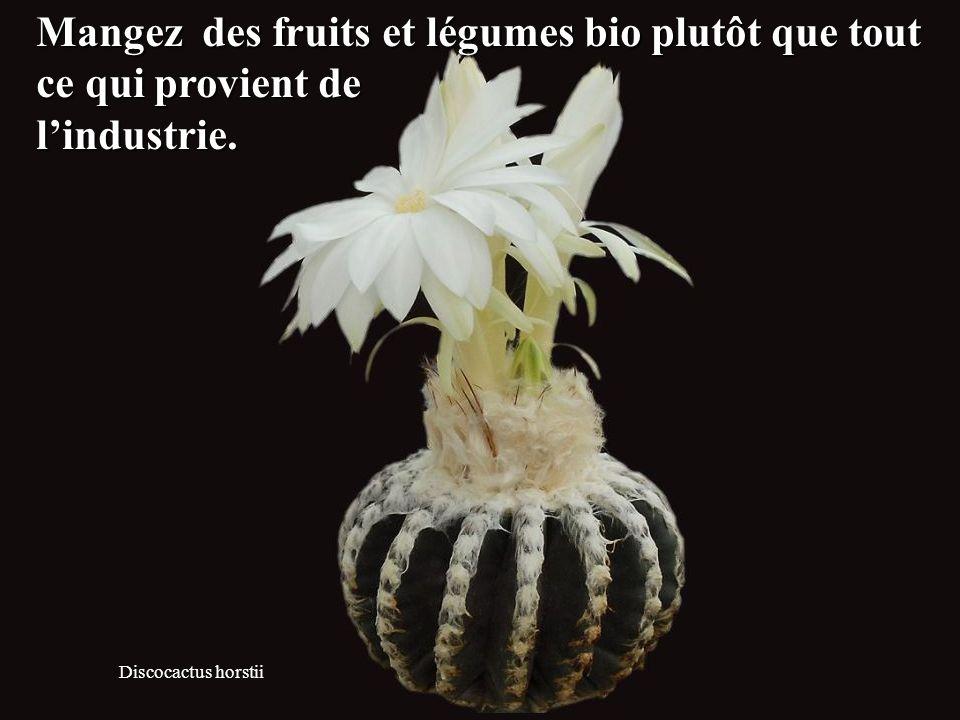Discocactus horstii Mangez des fruits et légumes bio plutôt que tout ce qui provient de l'industrie.