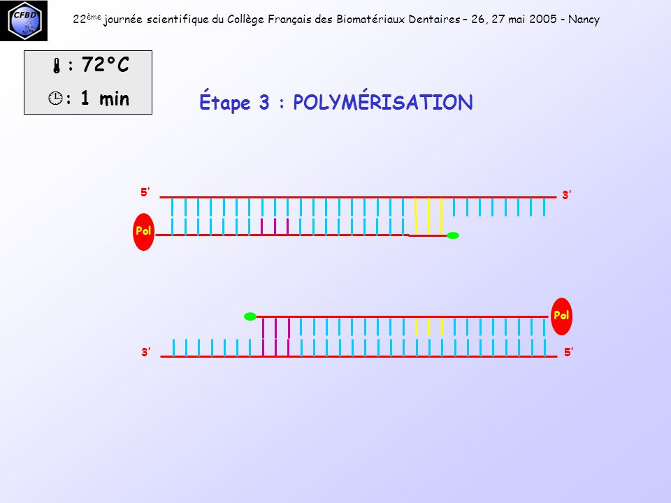 22 ème journée scientifique du Collège Français des Biomatériaux Dentaires – 26, 27 mai 2005 - Nancy 1 er cycle2 ème cycle3 ème cycle4 ème cycle