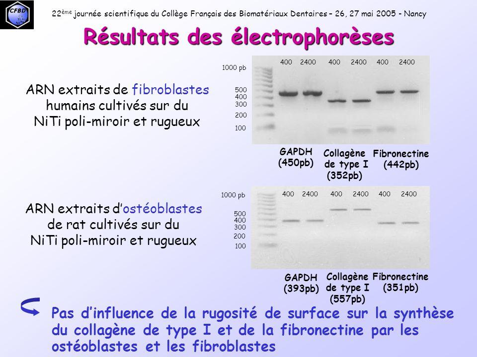 22 ème journée scientifique du Collège Français des Biomatériaux Dentaires – 26, 27 mai 2005 - Nancy ARN extraits d'ostéoblastes de rat cultivés sur du NiTi poli-miroir et rugueux OP (688pb) ON (650pb) OC (760pb) 1000 pb 100 200 300 400 500 OP : ostéopontine ON : ostéonectine OC : ostéocalcine L'expression de l'ostéocalcine est favorisée par un état de surface poli-miroir Résultats des électrophorèses 400 2400 400 2400 400 2400 Intensité de la bande plus importante sur le NiTi poli-miroir que le NiTi rugueux