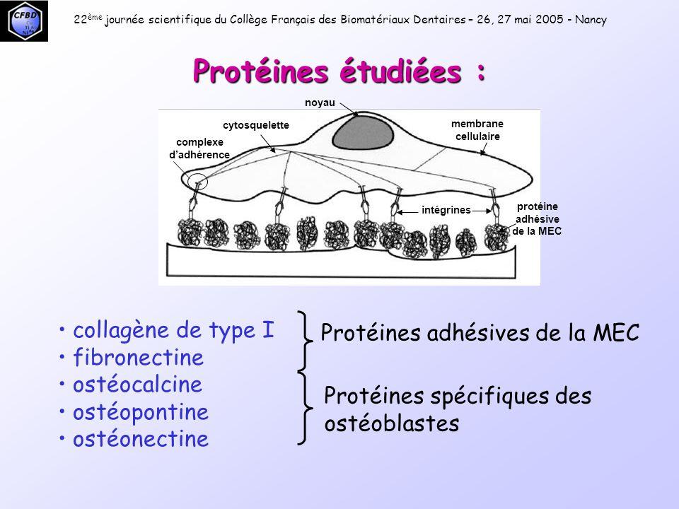 Réaction d'amplification en chaîne = PCR 5' 3' Séquence cible : ADN à amplifier Amorces Taq Polymérase Pol 22 ème journée scientifique du Collège Français des Biomatériaux Dentaires – 26, 27 mai 2005 - Nancy