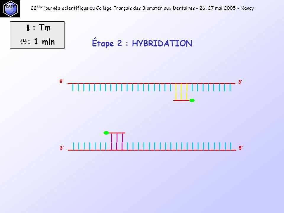 5' 3' 5'3' Pol  : 72°C  : 1 min 22 ème journée scientifique du Collège Français des Biomatériaux Dentaires – 26, 27 mai 2005 - Nancy Étape 3 : POLYMÉRISATION