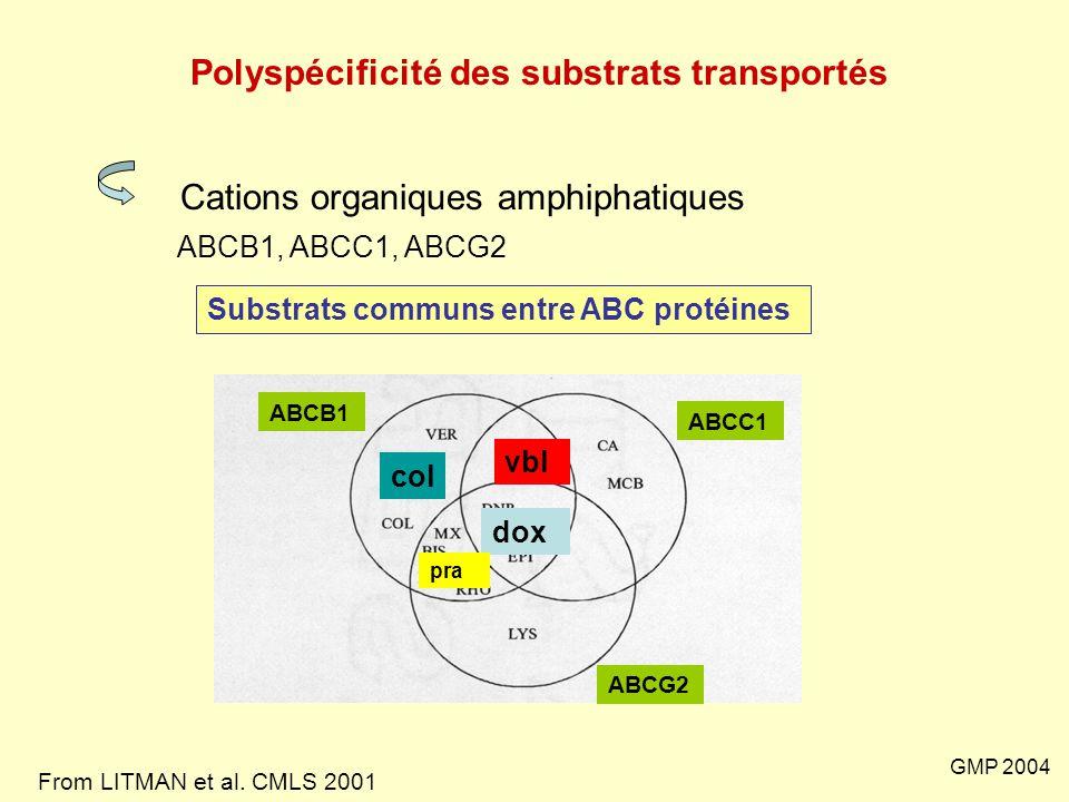 GMP 2004 Polyspécificité des substrats transportés Cations organiques amphiphatiques ABCB1, ABCC1, ABCG2 Substrats communs entre ABC protéines vbl dox
