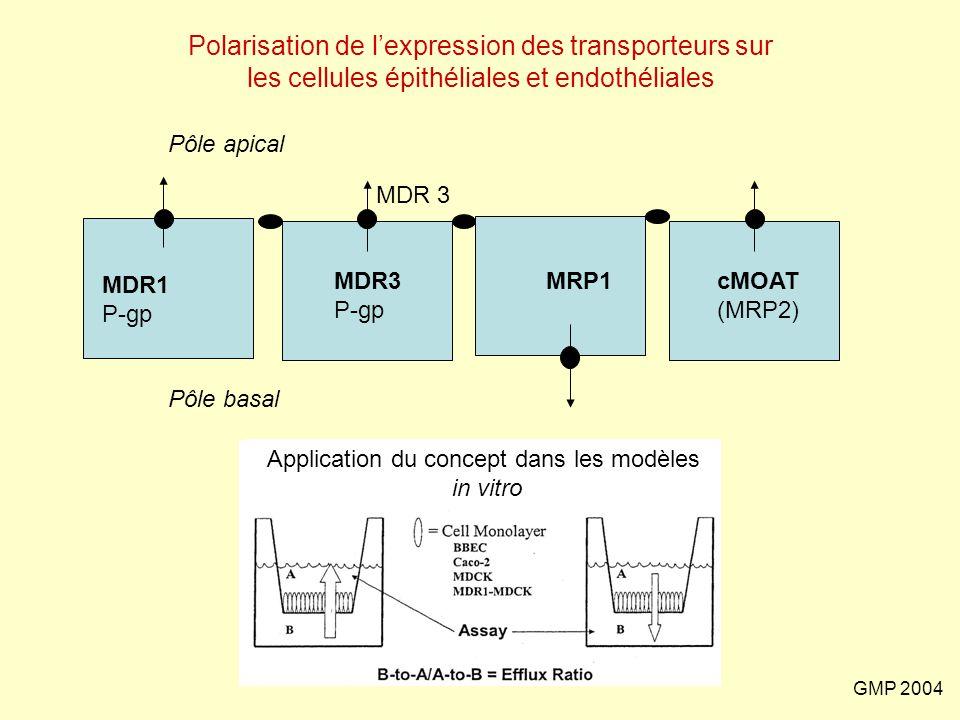 GMP 2004 Polarisation de l'expression des transporteurs sur les cellules épithéliales et endothéliales MDR1 P-gp MDR3 P-gp MRP1cMOAT (MRP2) MDR 3 Appl