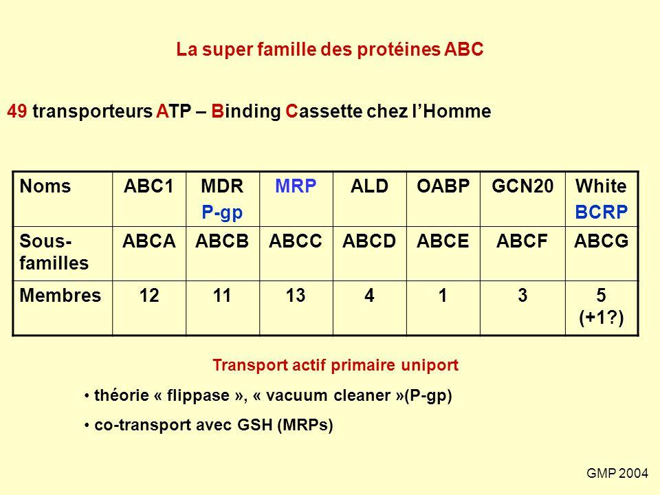 GMP 2004 NomsABC1MDR P-gp MRPALDOABPGCN20White BCRP Sous- familles ABCAABCBABCCABCDABCEABCFABCG Membres1211134135 (+1?) 49 transporteurs ATP – Binding