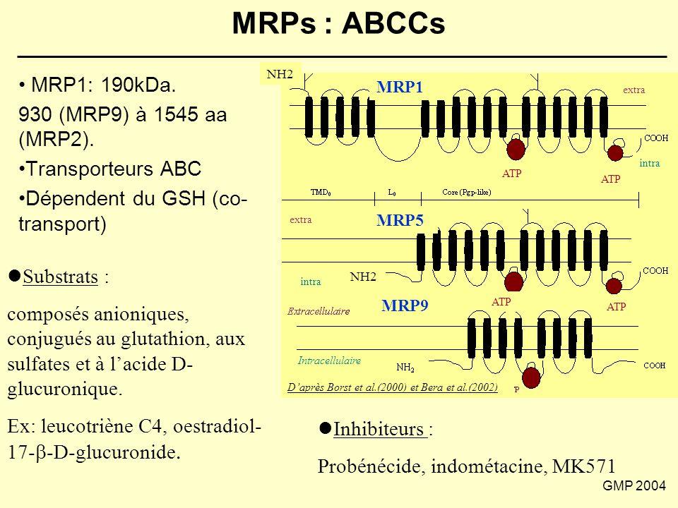 GMP 2004 MRPs : ABCCs MRP1 MRP5 MRP9 Intracellulaire NH2 ATP NH2 D'après Borst et al.(2000) et Bera et al.(2002) extra intra MRP1: 190kDa. 930 (MRP9)