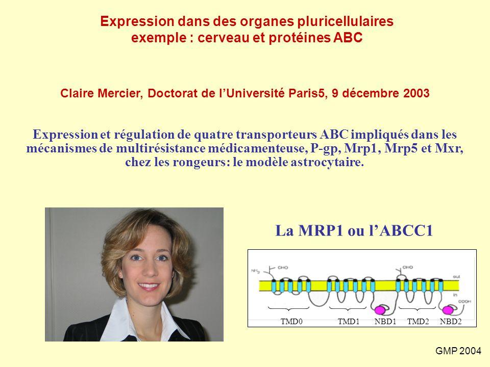 GMP 2004 Expression et régulation de quatre transporteurs ABC impliqués dans les mécanismes de multirésistance médicamenteuse, P-gp, Mrp1, Mrp5 et Mxr