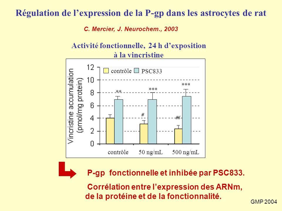GMP 2004 Régulation de l'expression de la P-gp dans les astrocytes de rat Activité fonctionnelle, 24 h d'exposition à la vincristine contrôle50 ng/mL