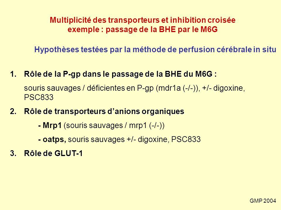 GMP 2004 Multiplicité des transporteurs et inhibition croisée exemple : passage de la BHE par le M6G 1.Rôle de la P-gp dans le passage de la BHE du M6