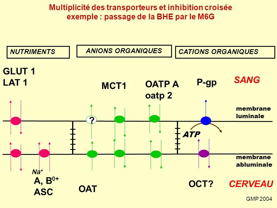 GMP 2004 Na + GLUT 1 LAT 1 A, B 0+ ASC NUTRIMENTS SANG CERVEAU CATIONS ORGANIQUES membrane abluminale membrane luminale P-gp ATP OCT? ANIONS ORGANIQUE