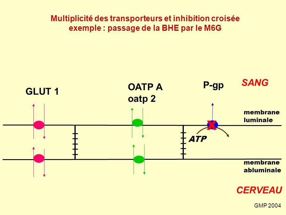 GMP 2004 GLUT 1 SANG CERVEAU membrane abluminale membrane luminale P-gp ATP OATP A oatp 2 Multiplicité des transporteurs et inhibition croisée exemple