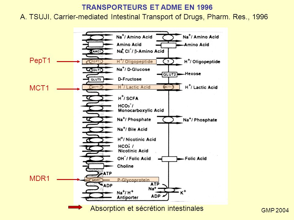 GMP 2004 GLUT 1 SANG CERVEAU membrane abluminale membrane luminale P-gp ATP OATP A oatp 2 Multiplicité des transporteurs et inhibition croisée exemple : passage de la BHE par le M6G X