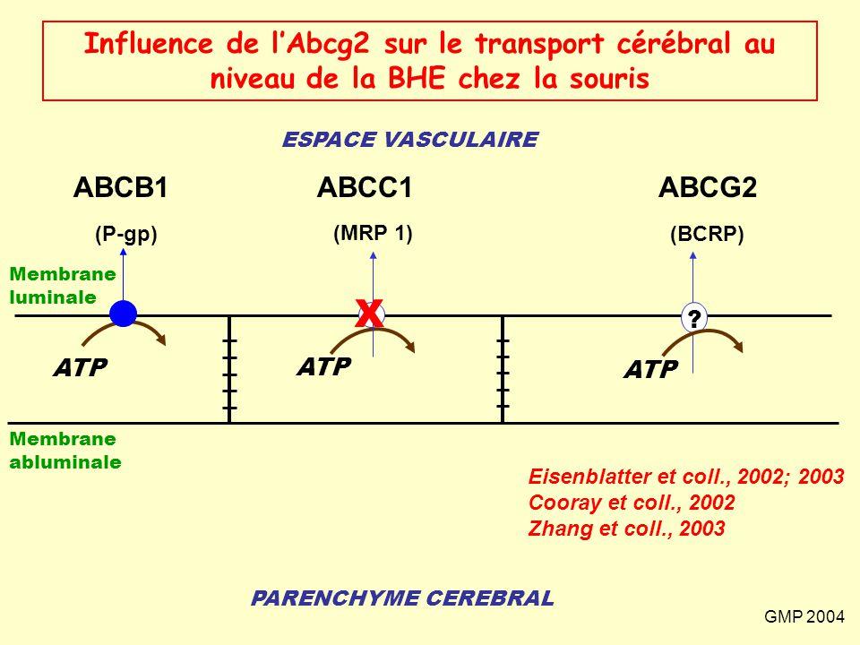 ESPACE VASCULAIRE PARENCHYME CEREBRAL (P-gp) ATP Membrane abluminale Membrane luminale ABCB1 (MRP 1) ATP ABCC1 Influence de l'Abcg2 sur le transport c