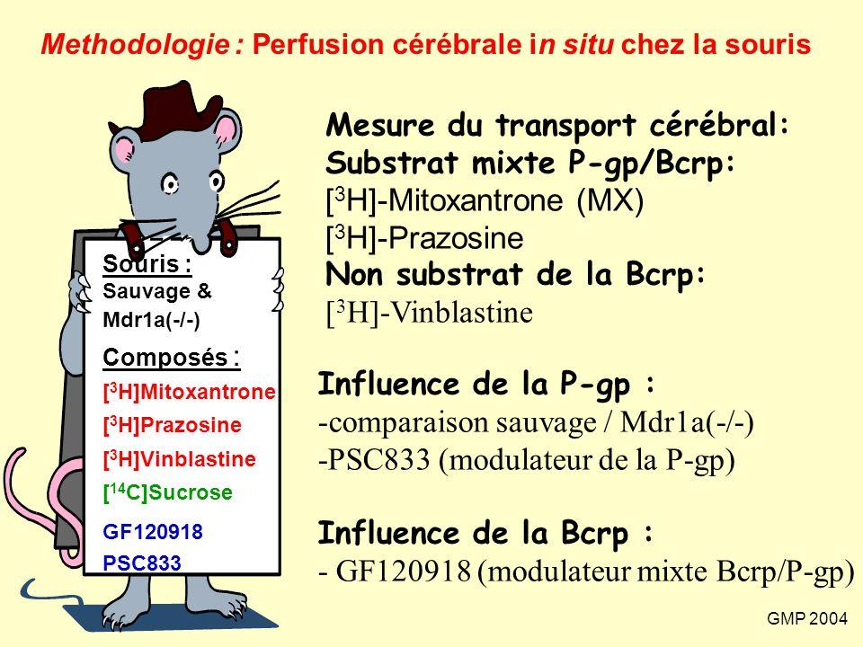 GMP 2004 Souris : Sauvage & Mdr1a(-/-) Composés : [ 3 H]Mitoxantrone [ 3 H]Prazosine [ 3 H]Vinblastine [ 14 C]Sucrose GF120918 PSC833 Methodologie : P