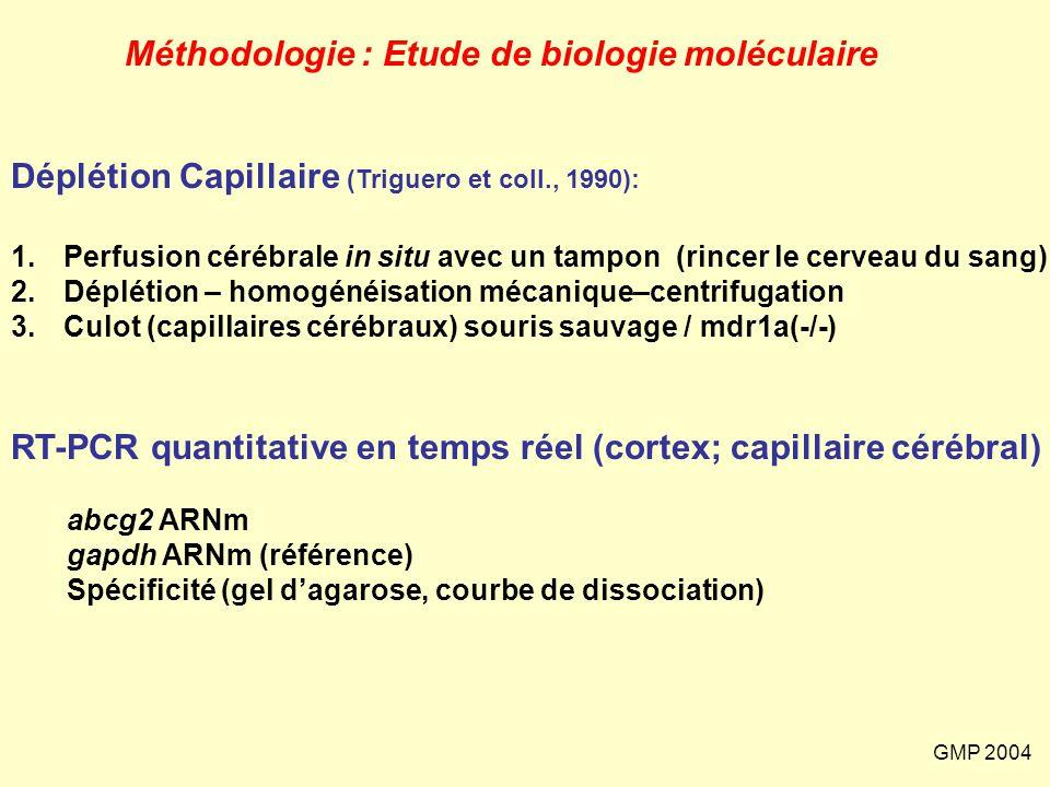 GMP 2004 Méthodologie : Etude de biologie moléculaire Déplétion Capillaire (Triguero et coll., 1990): 1.Perfusion cérébrale in situ avec un tampon (ri