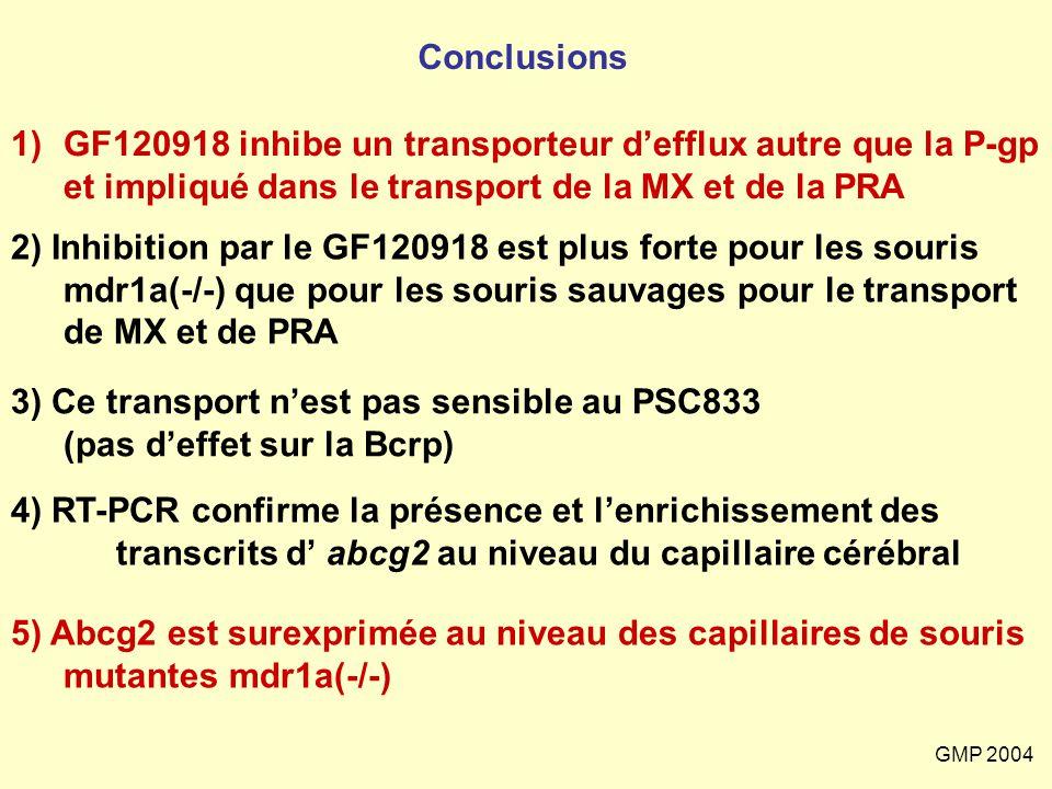 GMP 2004 3) Ce transport n'est pas sensible au PSC833 (pas d'effet sur la Bcrp) 5) Abcg2 est surexprimée au niveau des capillaires de souris mutantes
