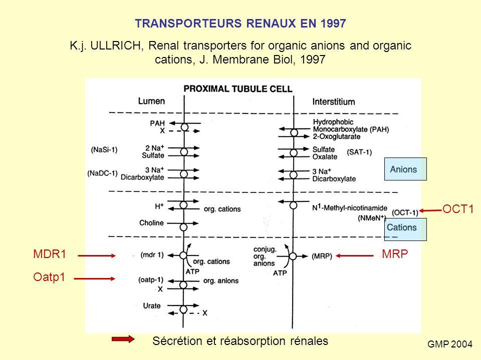 GMP 2004 TRANSPORTEURS RENAUX EN 1997 K.j. ULLRICH, Renal transporters for organic anions and organic cations, J. Membrane Biol, 1997 MDR1 Oatp1 MRP O