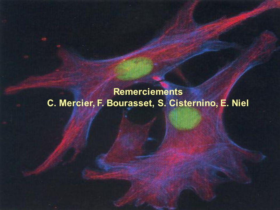 GMP 2004 Remerciements C. Mercier, F. Bourasset, S. Cisternino, E. Niel