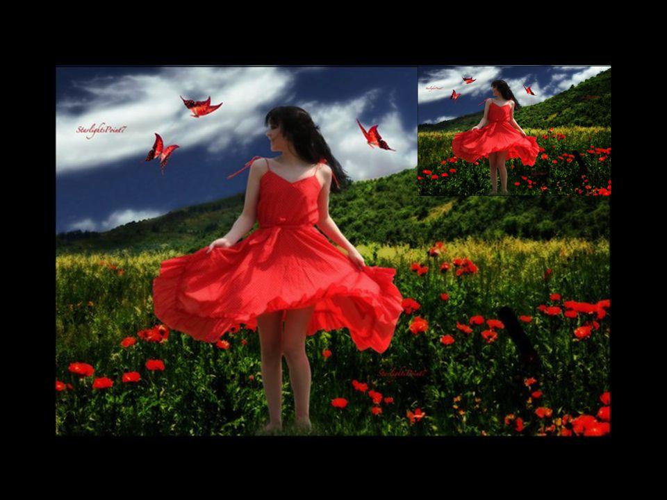Leurs corolles de soie, si belles, si fragiles, Semblent danser au vent sur les tiges graciles. Ils avaient disparus de nos prés et nos champs, Traqué