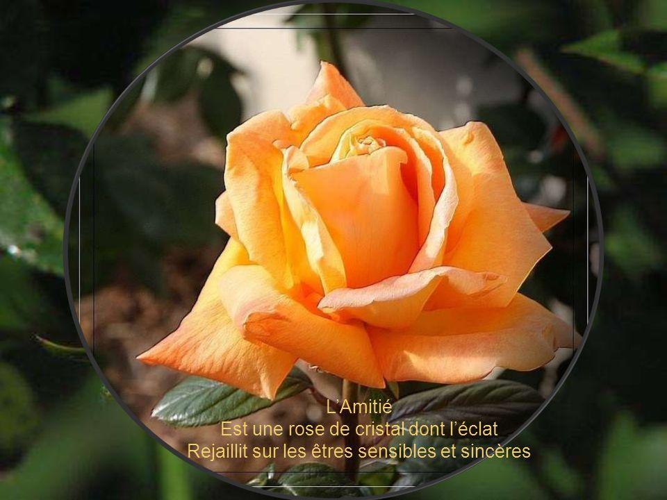 L'Amitié Est une rose de cristal dont l'éclat Rejaillit sur les êtres sensibles et sincères