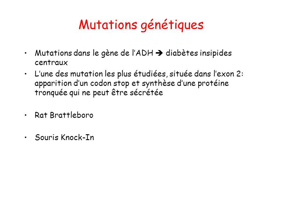 Mutations génétiques Mutations dans le gène de l'ADH  diabètes insipides centraux L'une des mutation les plus étudiées, située dans l'exon 2: apparit