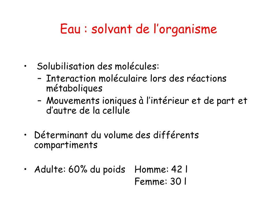 Eau : solvant de l'organisme Solubilisation des molécules: –Interaction moléculaire lors des réactions métaboliques –Mouvements ioniques à l'intérieur