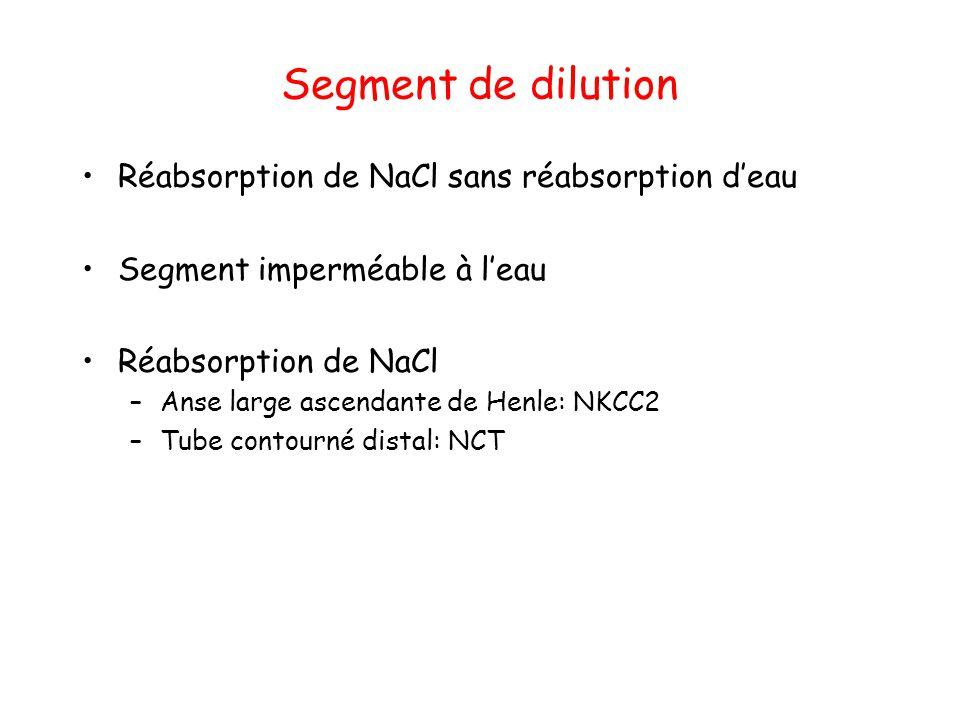 Segment de dilution Réabsorption de NaCl sans réabsorption d'eau Segment imperméable à l'eau Réabsorption de NaCl –Anse large ascendante de Henle: NKC