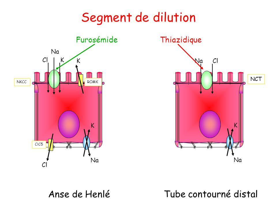 Segment de dilution Anse de Henlé Na K Tube contourné distal K Cl Na K Cl NCT ROMK ClC5 NKCC FurosémideThiazidique Na K