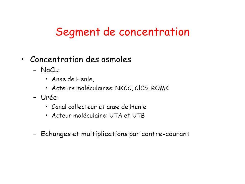 Segment de concentration Concentration des osmoles –NaCL: Anse de Henle, Acteurs moléculaires: NKCC, ClC5, ROMK –Urée: Canal collecteur et anse de Hen