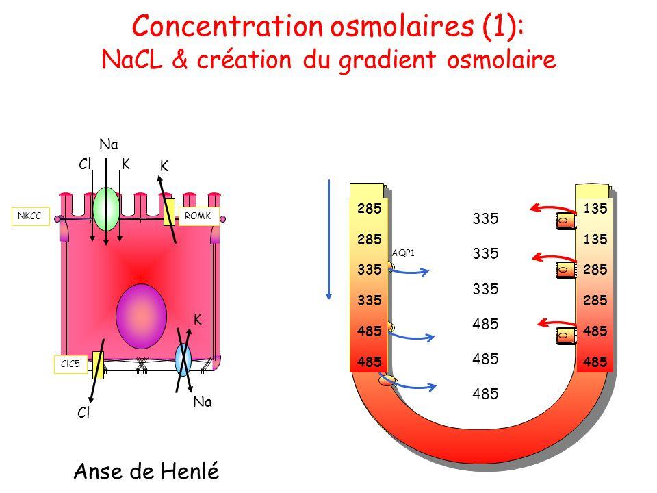 AQP1 285 185 385 285 385 185 385 135 285 335 485 335 485 135 285 485 285 335 485 Concentration osmolaires (1): NaCL & création du gradient osmolaire A
