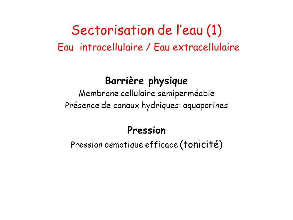 Sectorisation de l'eau (1) Eau intracellulaire / Eau extracellulaire Barrière physique Membrane cellulaire semiperméable Présence de canaux hydriques: