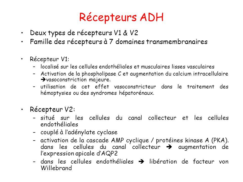 Récepteurs ADH Deux types de récepteurs V1 & V2 Famille des récepteurs à 7 domaines transmembranaires Récepteur V1: –localisé sur les cellules endothé