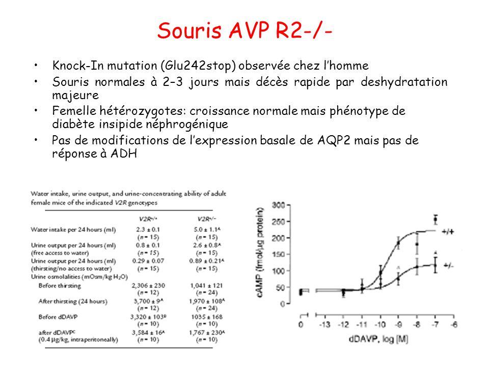 Souris AVP R2-/- Knock-In mutation (Glu242stop) observée chez l'homme Souris normales à 2–3 jours mais décès rapide par deshydratation majeure Femelle