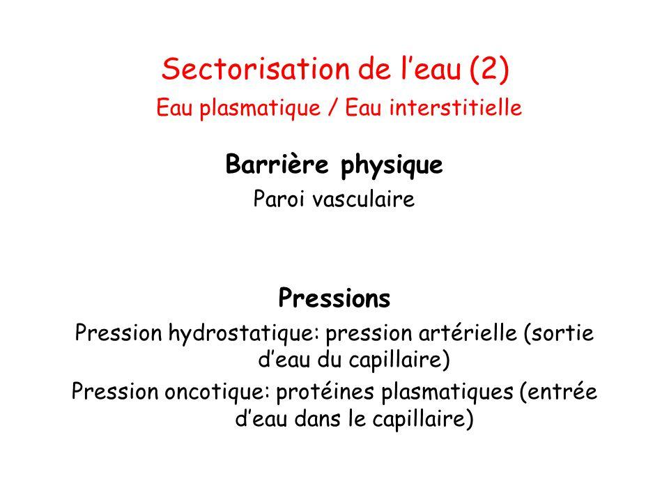 Eau extracellulaire 35 à 45% de l'eau totale Dépend du nombre d'osmoles extracellulaires (Na) qui est variable En équilibre avec le secteur intracellulaire de part la pression osmotique efficace Déterminant du volume plasmatique et de la pression artérielle