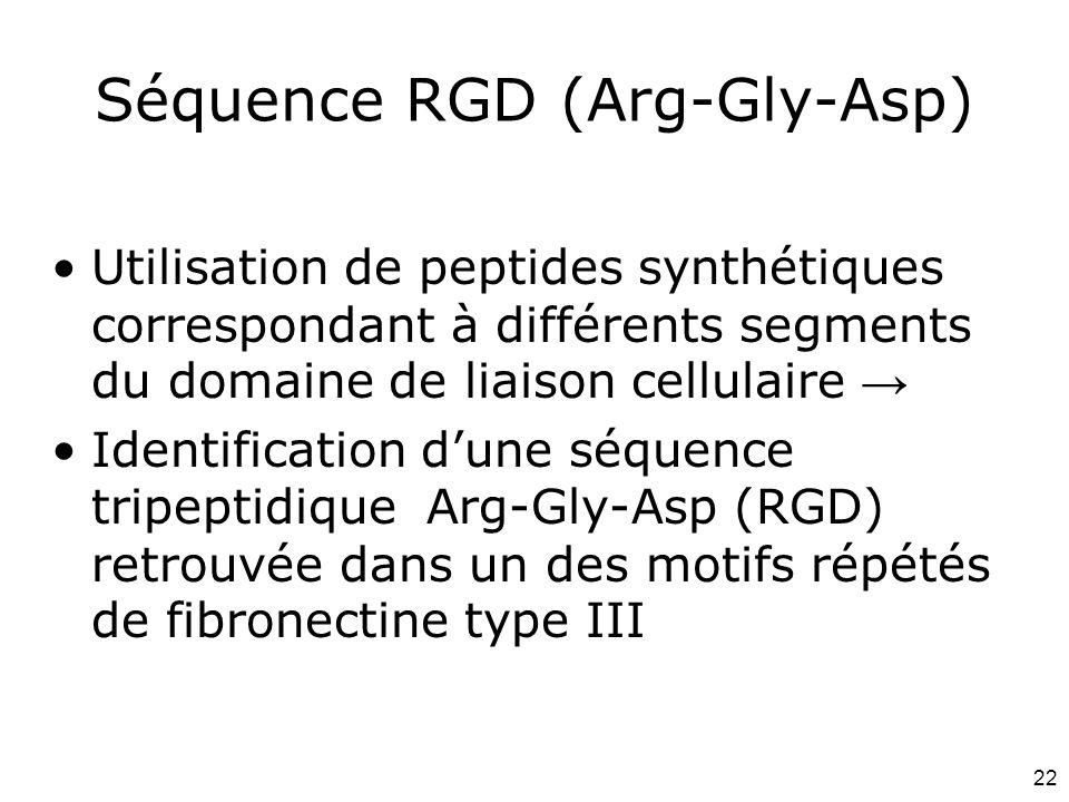 22 Séquence RGD (Arg-Gly-Asp) Utilisation de peptides synthétiques correspondant à différents segments du domaine de liaison cellulaire → Identificati