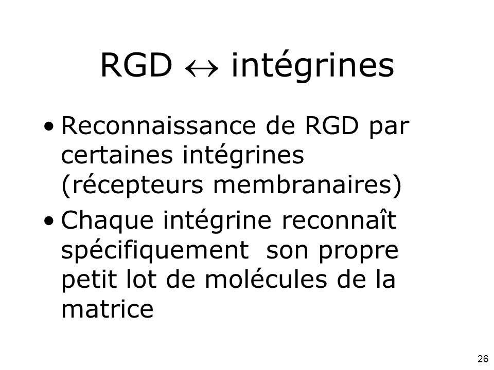 26 RGD  intégrines Reconnaissance de RGD par certaines intégrines (récepteurs membranaires) Chaque intégrine reconnaît spécifiquement son propre peti