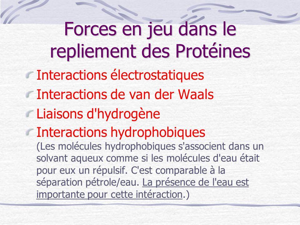 Forces en jeu dans le repliement des Protéines Interactions électrostatiques Interactions de van der Waals Liaisons d'hydrogène Interactions hydrophob