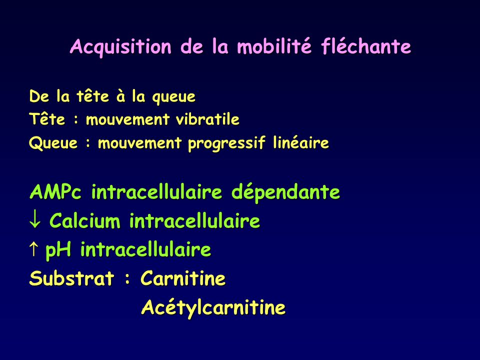 Acquisition de la mobilité fléchante De la tête à la queue Tête : mouvement vibratile Queue : mouvement progressif linéaire AMPc intracellulaire dépendante  Calcium intracellulaire  pH intracellulaire Substrat : Carnitine Acétylcarnitine