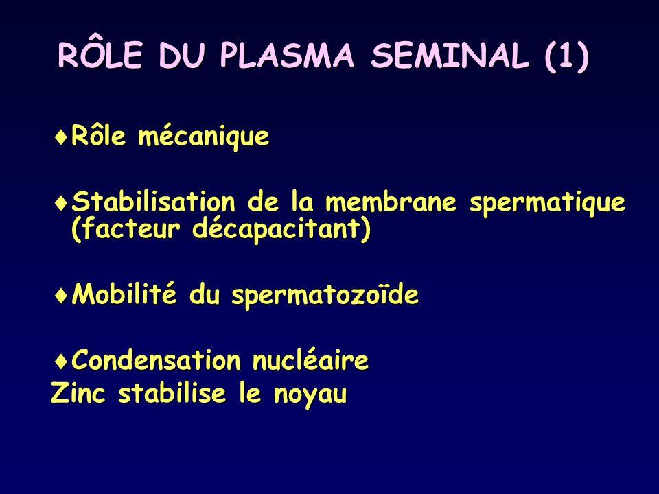 RÔLE DU PLASMA SEMINAL (1)  Rôle mécanique  Stabilisation de la membrane spermatique (facteur décapacitant)  Mobilité du spermatozoïde  Condensati