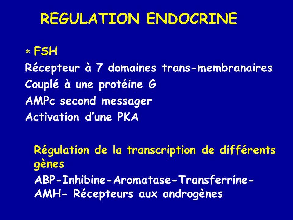 REGULATION ENDOCRINE  FSH Récepteur à 7 domaines trans-membranaires Couplé à une protéine G AMPc second messager Activation d'une PKA Régulation de la transcription de différents gènes ABP-Inhibine-Aromatase-Transferrine- AMH- Récepteurs aux androgènes