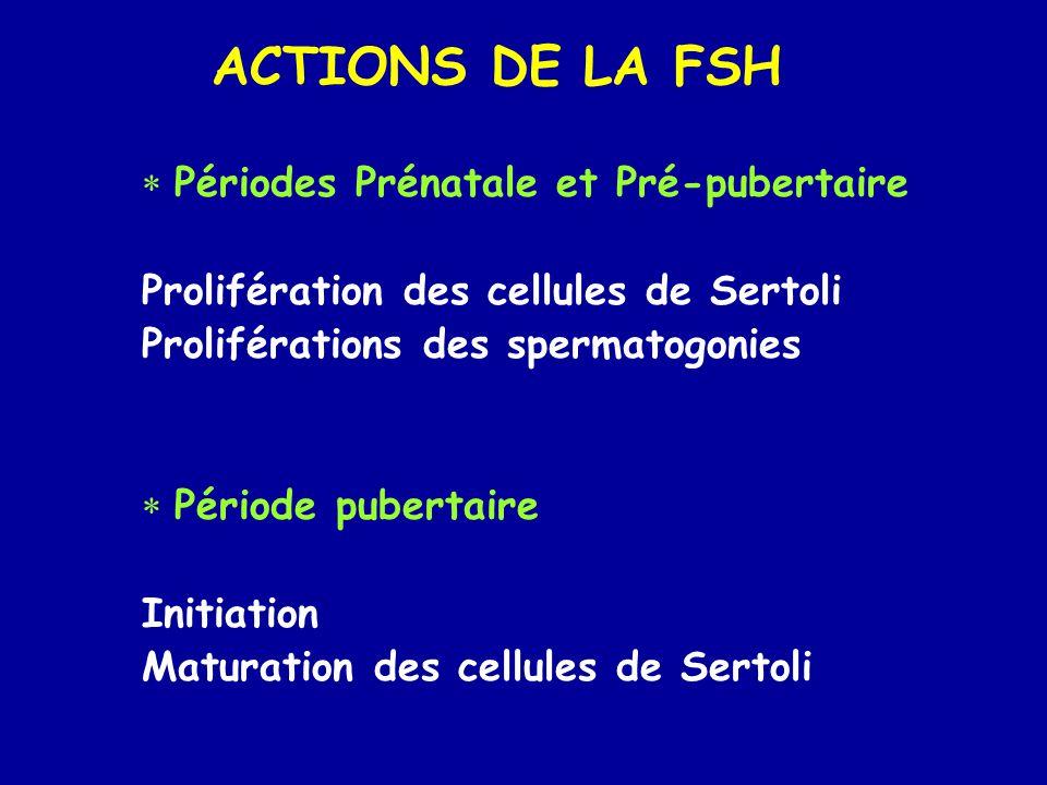 ACTIONS DE LA FSH  Périodes Prénatale et Pré-pubertaire Prolifération des cellules de Sertoli Proliférations des spermatogonies  Période pubertaire Initiation Maturation des cellules de Sertoli
