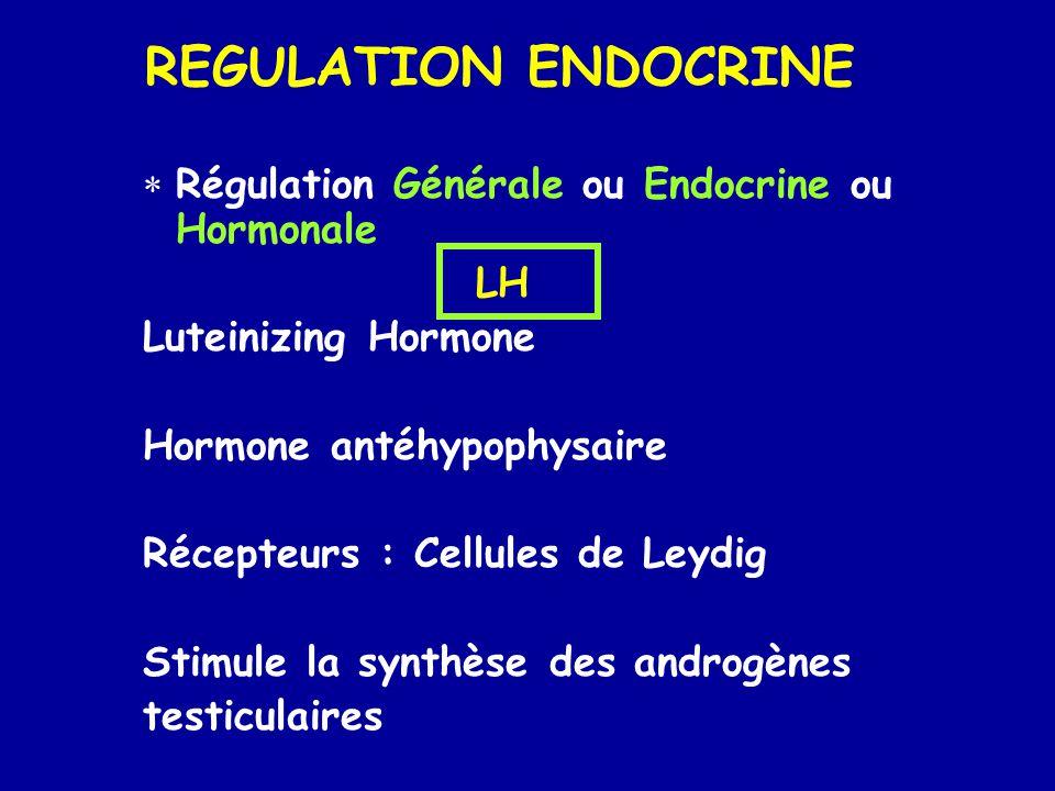 REGULATION ENDOCRINE  Régulation Générale ou Endocrine ou Hormonale LH Luteinizing Hormone Hormone antéhypophysaire Récepteurs : Cellules de Leydig Stimule la synthèse des androgènes testiculaires