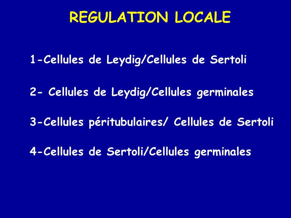 REGULATION LOCALE 1-Cellules de Leydig/Cellules de Sertoli 2- Cellules de Leydig/Cellules germinales 3-Cellules péritubulaires/ Cellules de Sertoli 4-Cellules de Sertoli/Cellules germinales