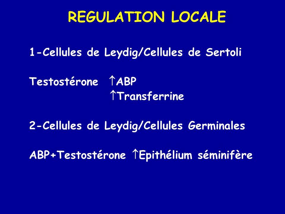 REGULATION LOCALE 1-Cellules de Leydig/Cellules de Sertoli Testostérone  ABP  Transferrine 2-Cellules de Leydig/Cellules Germinales ABP+Testostérone  Epithélium séminifère