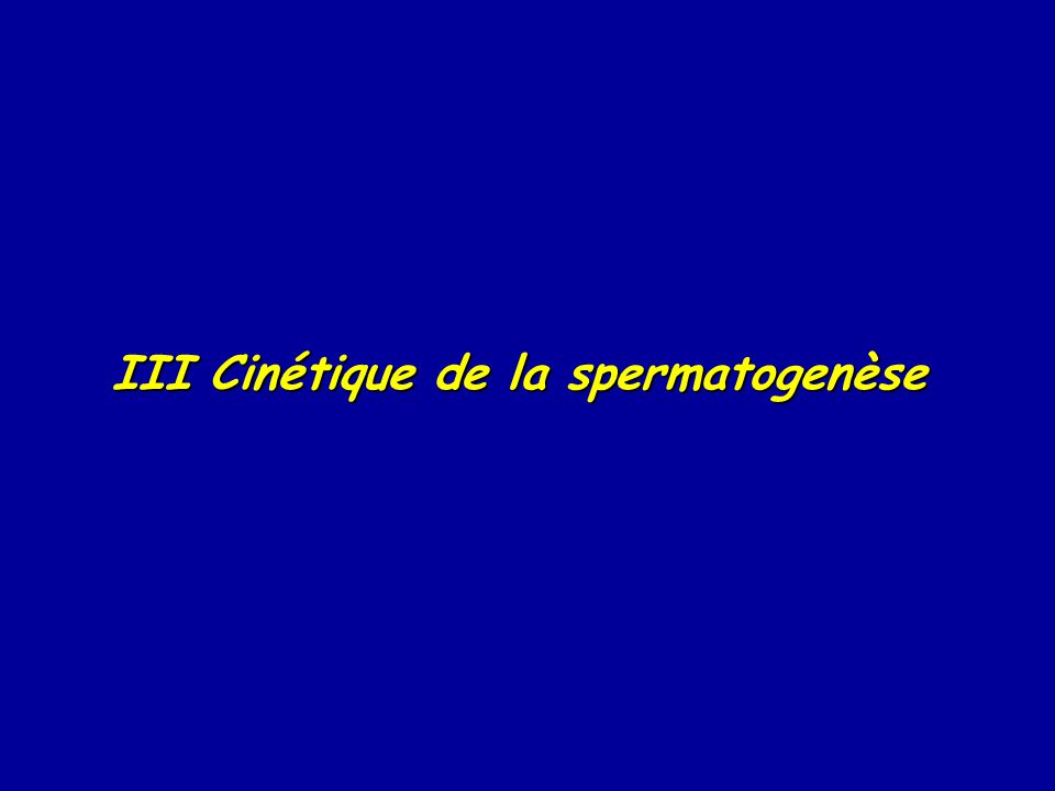 III Cinétique de la spermatogenèse