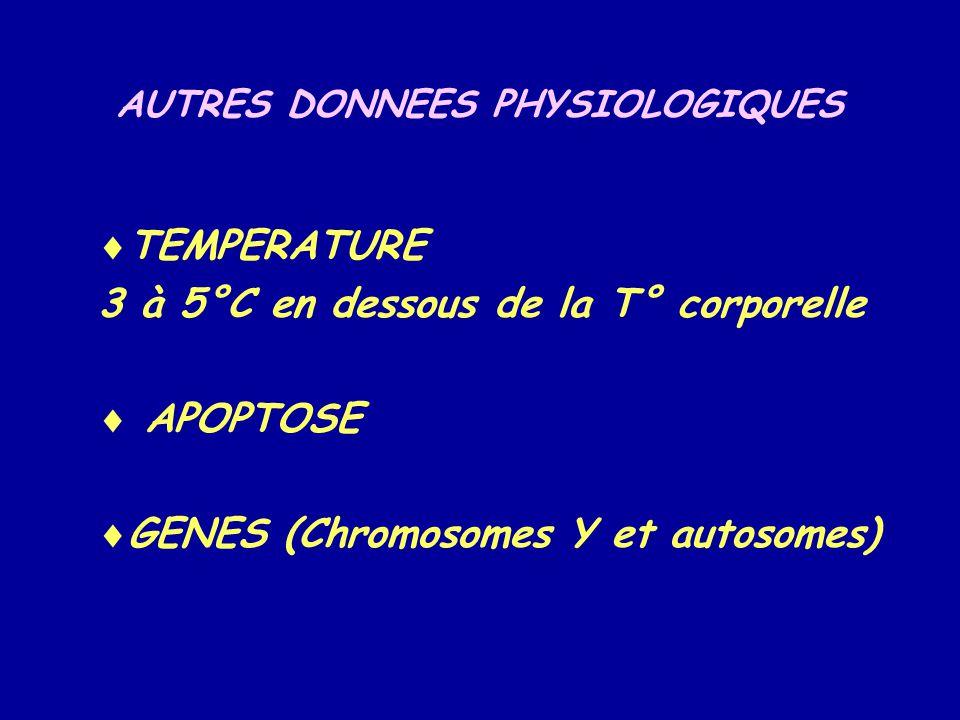 AUTRES DONNEES PHYSIOLOGIQUES  TEMPERATURE 3 à 5°C en dessous de la T° corporelle  APOPTOSE  GENES (Chromosomes Y et autosomes)