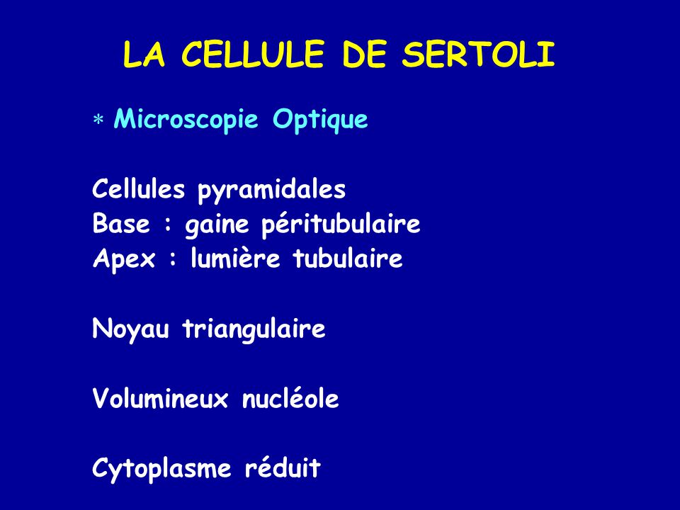 LA CELLULE DE SERTOLI  Microscopie Optique Cellules pyramidales Base : gaine péritubulaire Apex : lumière tubulaire Noyau triangulaire Volumineux nuc